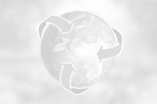 anncapictures%20auf%20Pixabaynature-3294