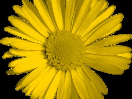 Kostenfrei teilnehmen: Mit den IST-Webinaren zu Resilienz zurück zu 100% Leistung!