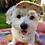 "Thumbnail: Kappe für Hunde ""Princess"""