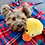Thumbnail: Hundespielzeug Haustier