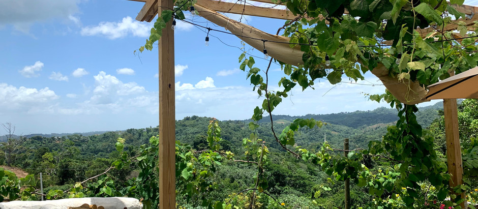 Finca Vista Bella Vinos de Puerto Rico