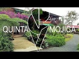 Quinta Mojica