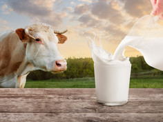 How to choose the perfect milk for homemade yogurt and kefir?