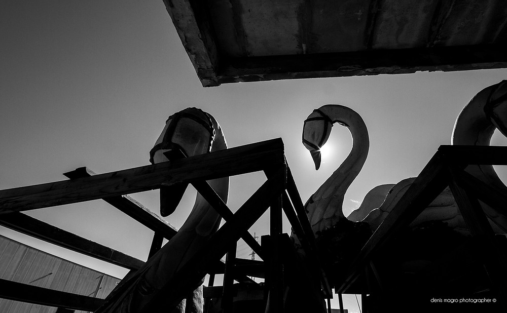 Psico-fotografia / Swan / abandoned places / luoghi abbandonati / Denis Magro