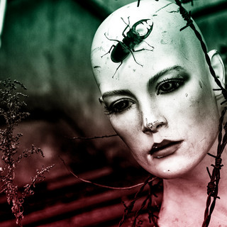 Entofood - Denis Magro