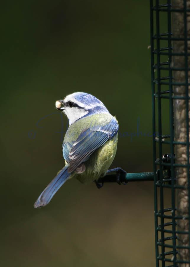 A full beak
