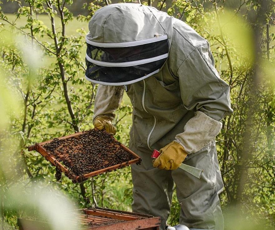 Rhug Bees