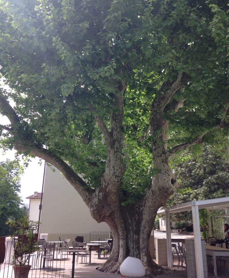 on a tree.jpg