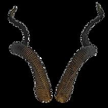 Horns-A.png