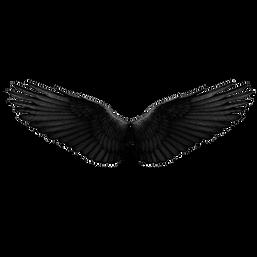 Crow-Wings.png