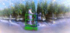IMG_4691_edited_edited.jpg