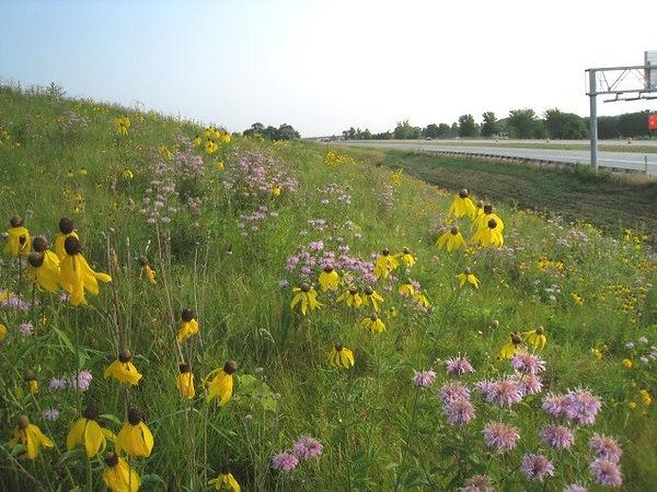 roadside-flowers.jpg