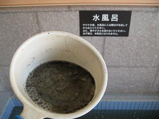 水風呂の循環配管洗浄中です