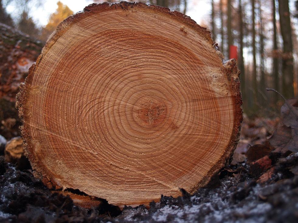 tree rings new idea.jpg