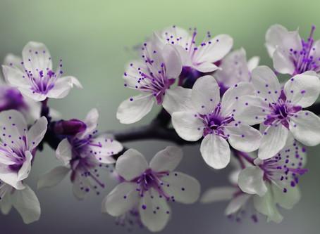 Les aromates ont des vertus pour la santé.