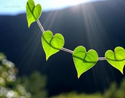 Feuille coeur de vert. La connaissance de soi et les sens sont primordiaux pour comprendre le monde et rester fidèle à ses rêves.