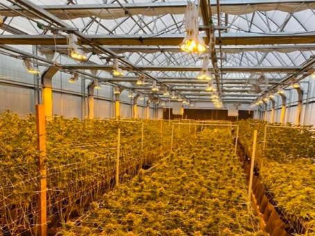 Health, Cannabis and Oregon