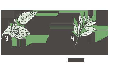 jerusalem-plants2.png
