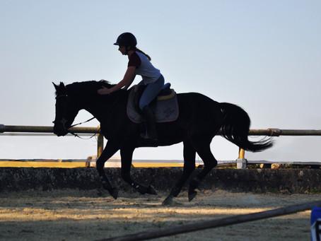 Bien-être & mal-être de nos chevaux