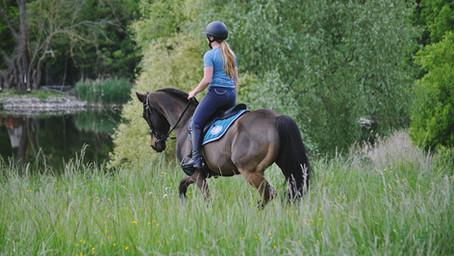 Remise en route du poney