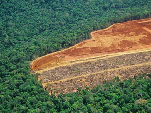 Este 31 de agosto la Dirección Territorial Amazonía rendirá cuentas a la ciudadanía