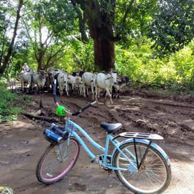 bike samara