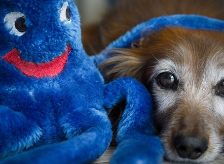 6 Good Reasons To Adopt A Senior Or Older Dog By Vicki Clinebell