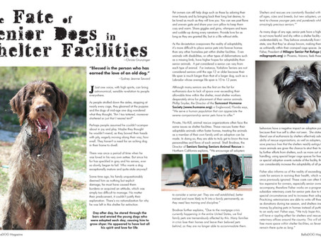 The Fate of Senior Dogs in Shelter Facilities