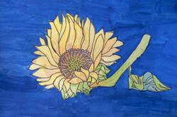 Sunflower Small (1 of 1)