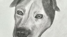 Sketching Pets: Seeing clearly and combining multiple images