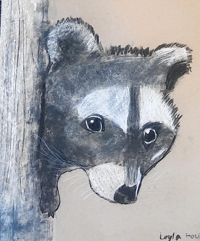 Raccoon Edited