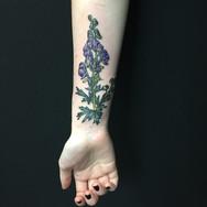 Botanical arm.jpg