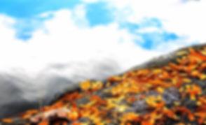 leaves cliff cloud.jpg
