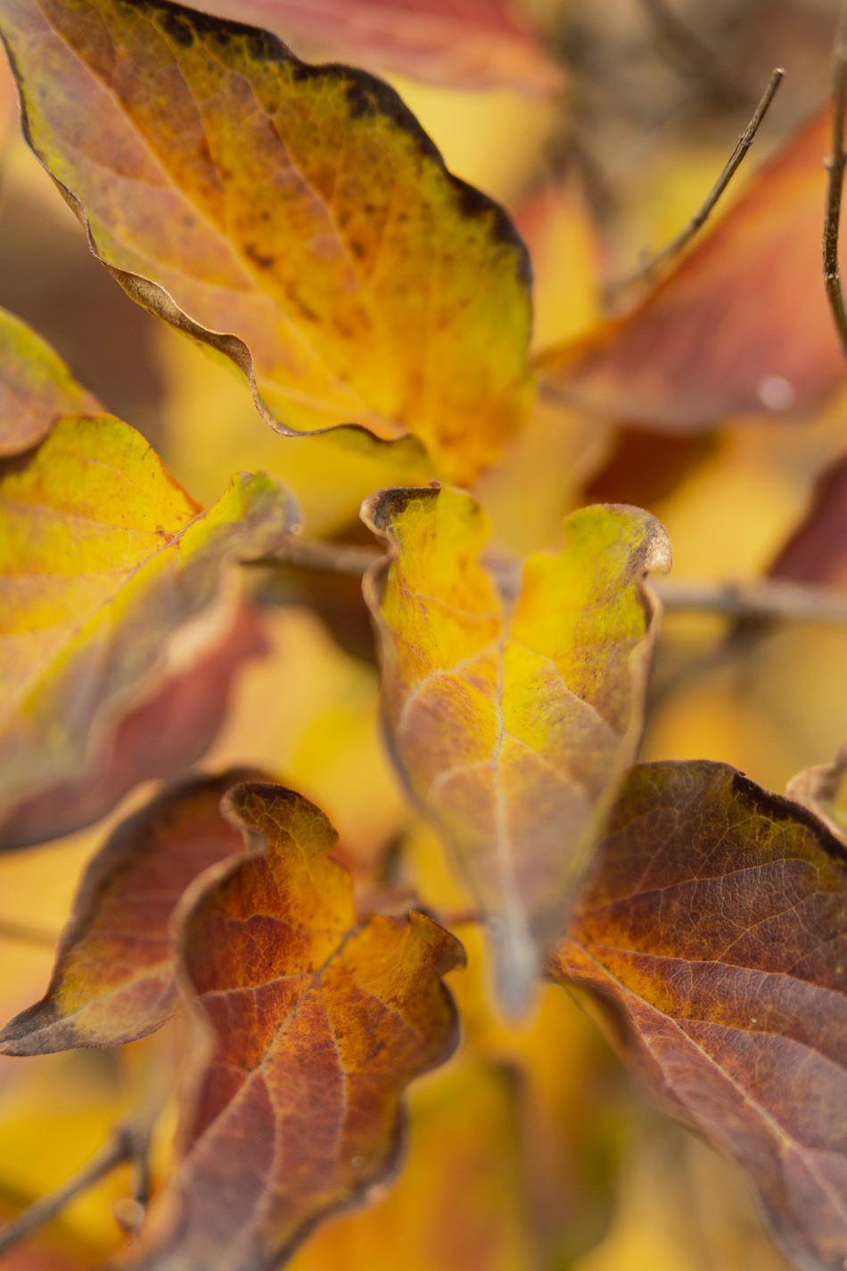 automne V