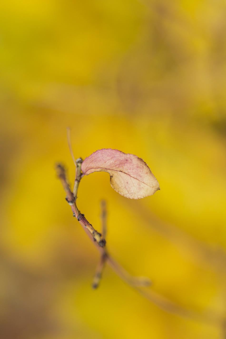 automne II