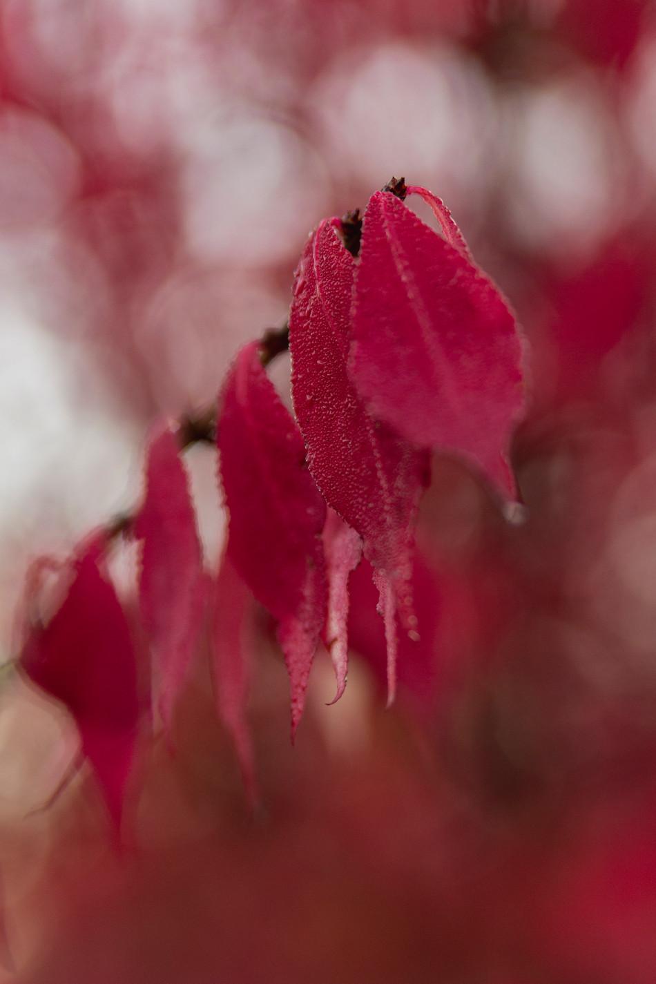 automne VI