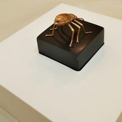Darkling UAE Beetle in gold