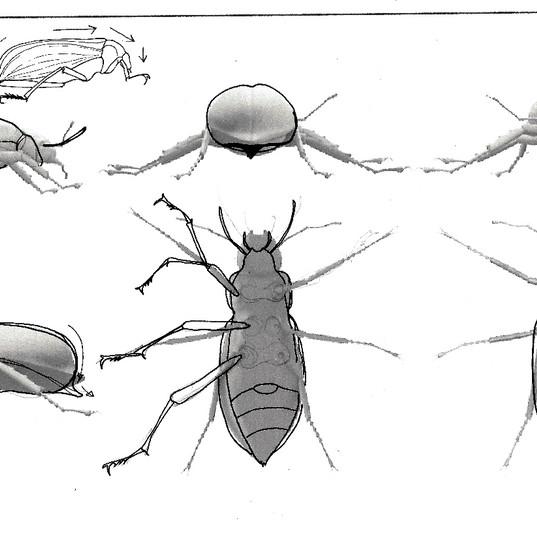 study of Darkling UAE Beetle in gold
