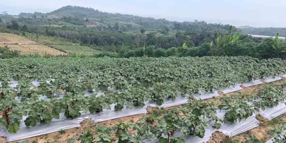 Ecobuild Foods Farm