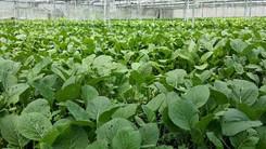 Ecobuild Foods Farm 3