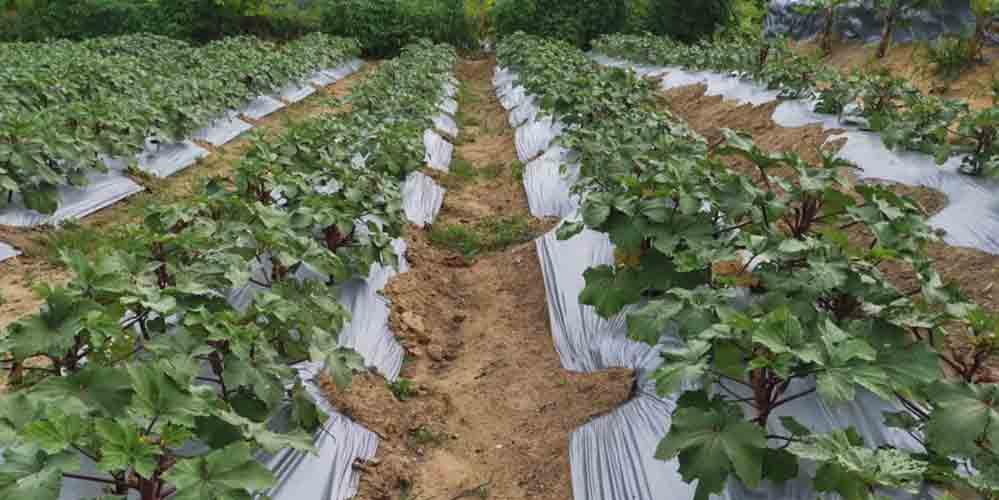 Ecobuild Foods Farm 2