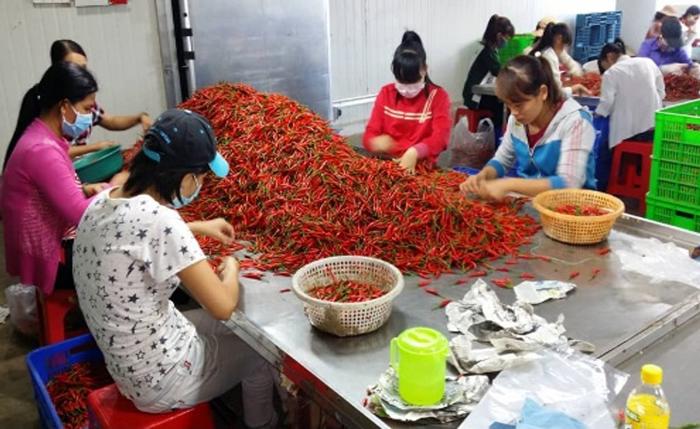 Ecobuild Foods Processing Plant 4