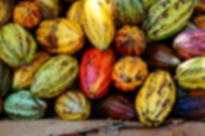 Stack Macro of Cocoa pods from Samana, D