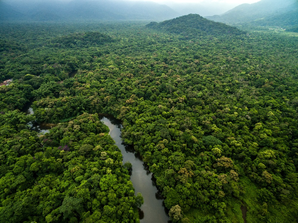 CONSERVING THE CONGO BASIN