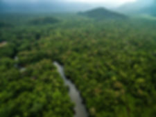 Aerial View of River in Rainforest, Lati