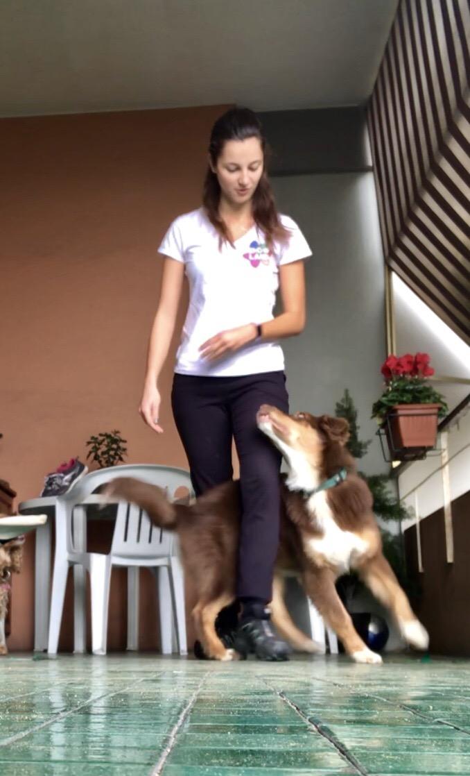 Tricks e dog dance Genova