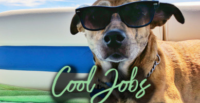 Introducing Really Cool Jobs