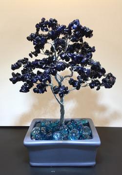 Blue Goldstone Tree