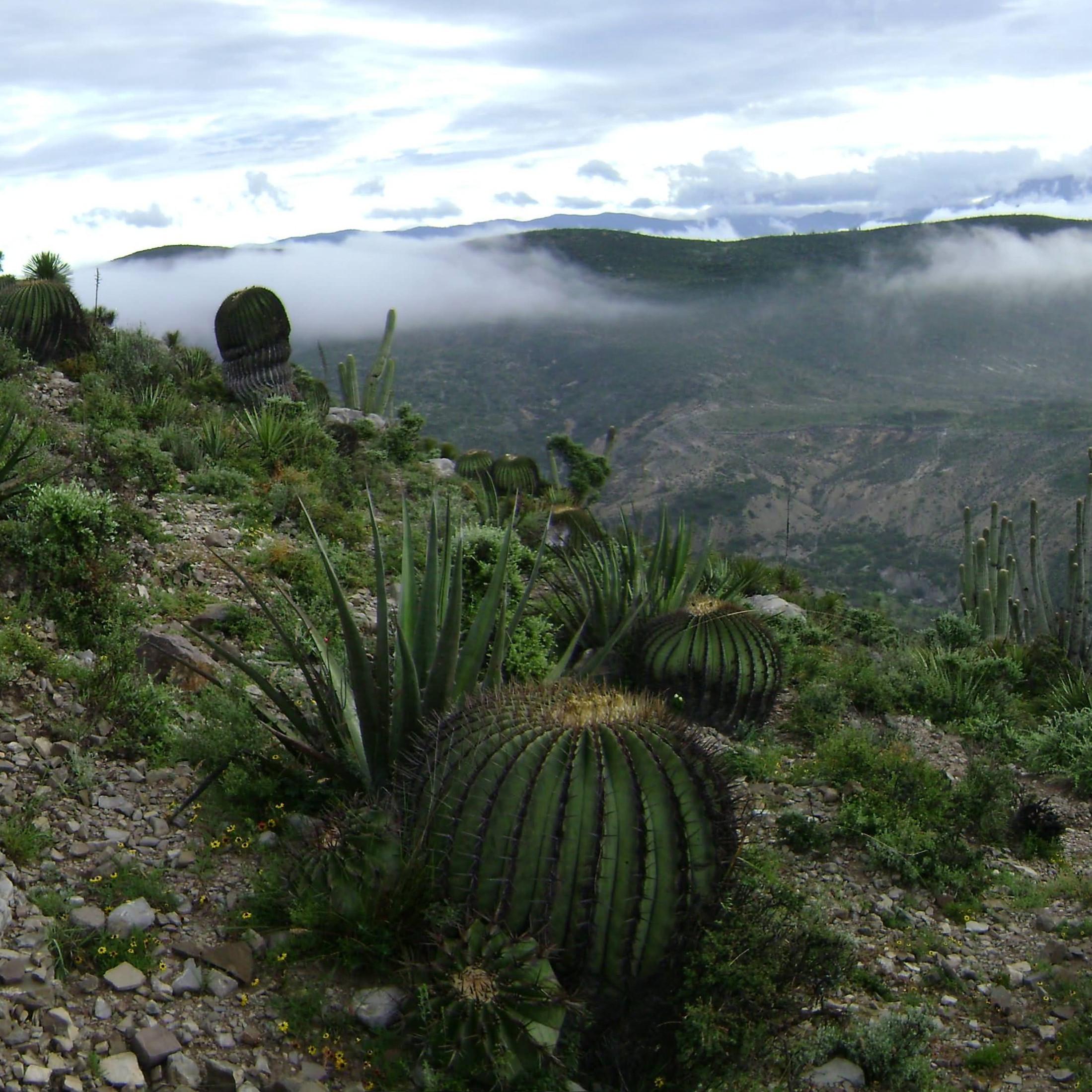 Reserva de la Biosfera Cuicatlán