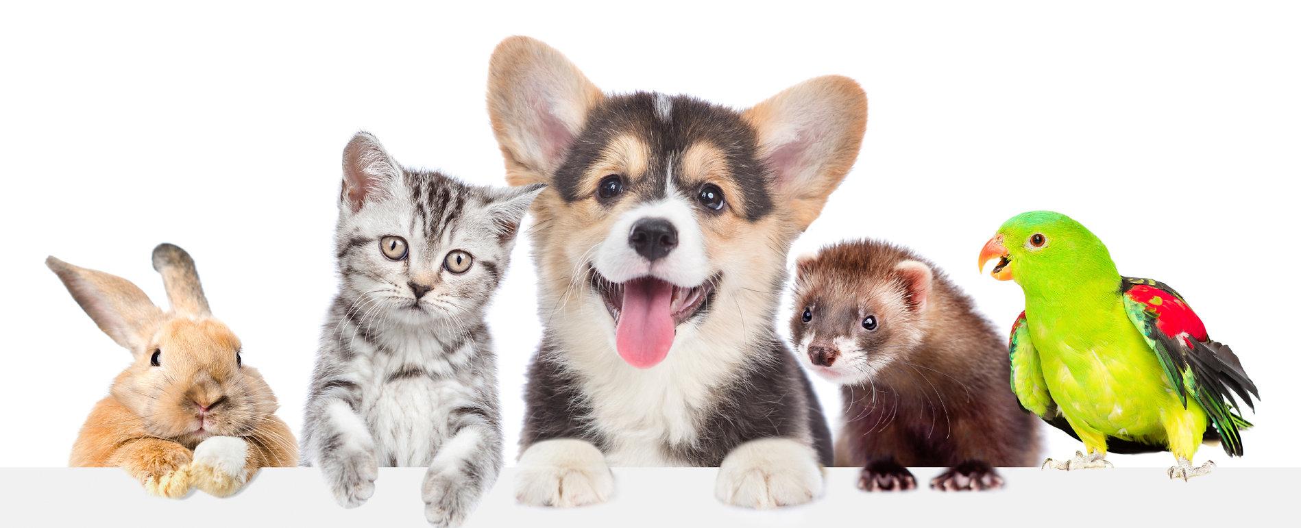 bg_terapia_pets.jpg